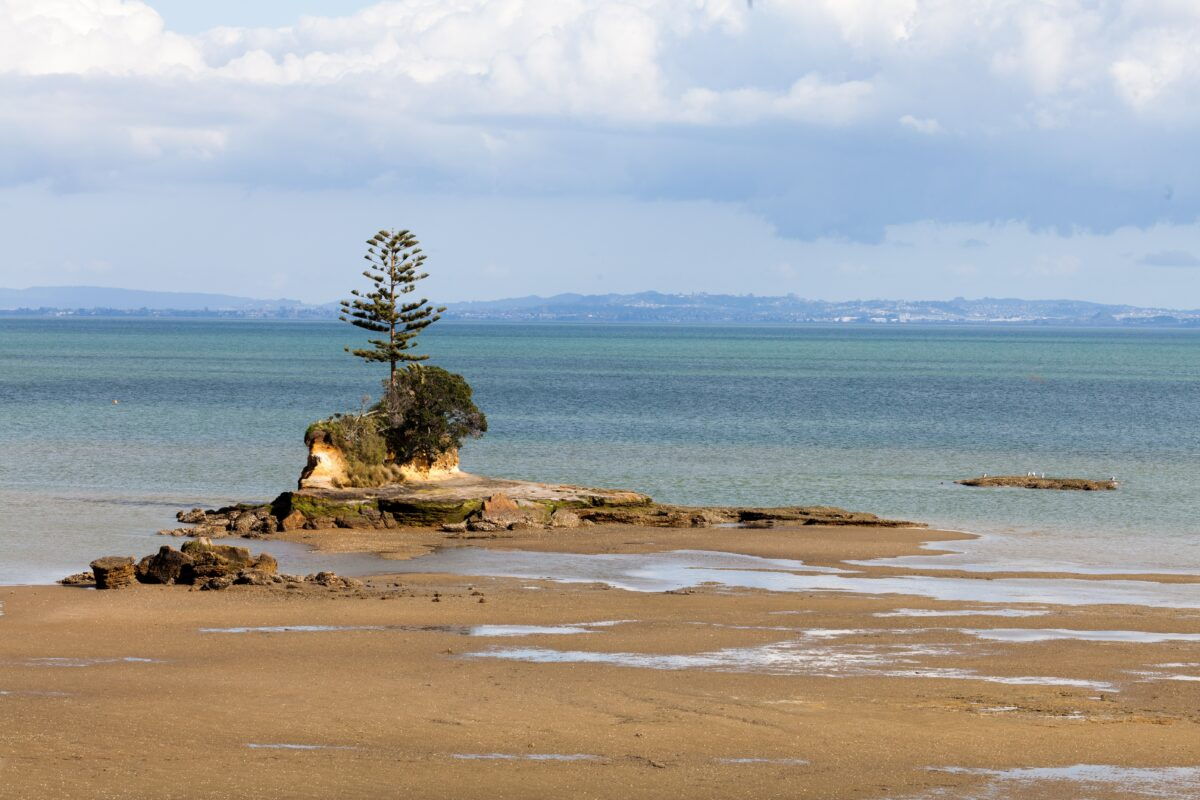 Brooks Beach in Auckland's Awhitu Regional Park