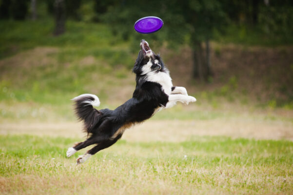 Best dog parks in Auckland, New Zealand